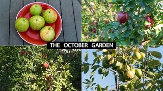 The California Garden In October - Harvests & Fall Garden Preparation Guide