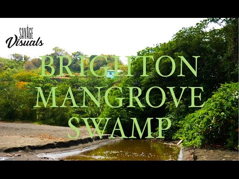 Brighton Mangrove Swamp [St.Vincent and the Grenadines] || 003