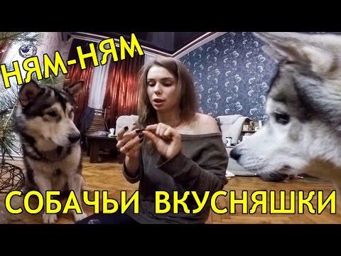 Новые Лакомства для Собак ! От игры до драки одна ревность, сцепились хаски и маламут.