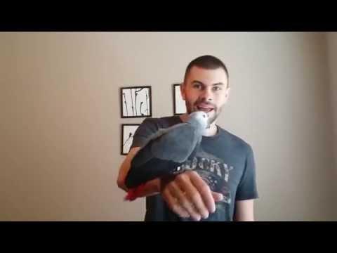 Meet Brook, the Baby African Grey