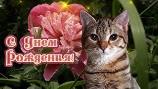 С днем рождения подружка. Видео поздравление с кошкой