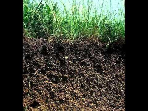 Materia org nica para el cuidado del suelo youtube for Suelo organico dibujo animado