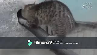 приколы над котами