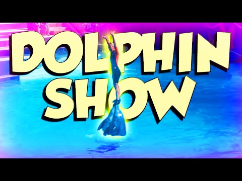 Dolphin Show Live! (Swimming With Dolphins Vlog)