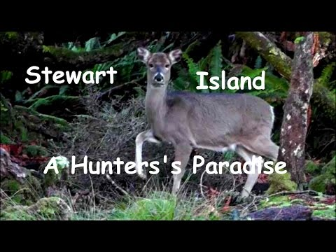 Stewart Island - A Hunters Paradise