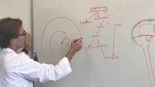 Brain Tumors 101: Meningioma Brain Tumors