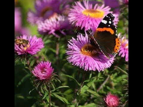 Топ цветов, способных задавить самые злостные сорняки за забором