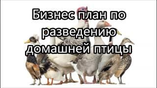 видео Фермерский бизнес: разведение и выращивание гусей