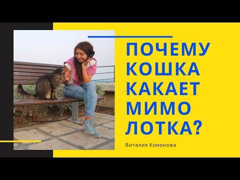 Почему кошка какает мимо лотка? Кошка гадит на кровать, а писает в лоток.