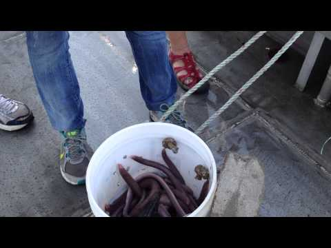 Opening A Hagfish Trap