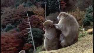 Гомосексуализм у животных