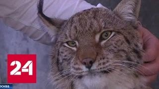 В столице серьезно ужесточат правила содержания диких животных