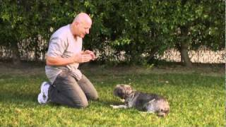 "Training Your Dog To ""play Dead"" - Clip #7"