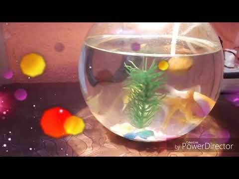 How To Use Air Pump In Fish Bowl