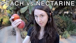 Nectarine = Mutant Peach?!