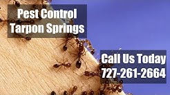 Pest Control  Tarpon Springs FL Residential Exterminators 24 Hr Bed Bug Control & Termite Treatment