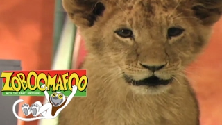🐒 Zoboomafoo 116 - Itchy | HD | Full Episode🐒