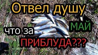 Отвел душу рыбалка на реке Мунгат Крапивино интересная приблуда