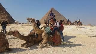 как слезть с верблюда