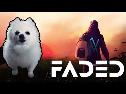 Dog Version Faded Alan Walker 4k Youtube