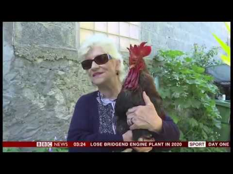 Maurice the cockerel court case pushed back (France) - BBC News - 7th June 2019