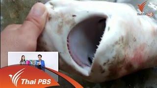 คิดนอกจอ :  ปลาฉลามติดแหในแม่น้ำ จ.ราชบุรี (24 ก.ค. 58 )