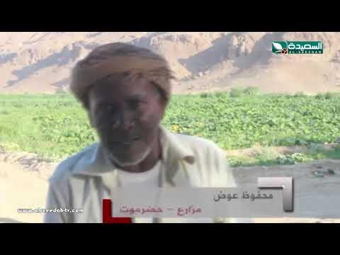 تقرير :  الطاقة الشمسية بديلا صديقا لمزارعي وادي حضرموت  (9-11-2018)