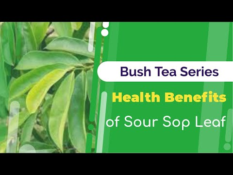 Health Benefits of Sour Sop Leaf Tea | Bush Tea Series | Jamaican Things