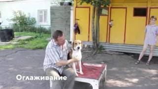 Что нужно знать о собаке