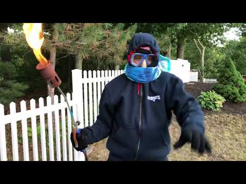 How to kill and destroy a bee hive Hornets with a flamethrower