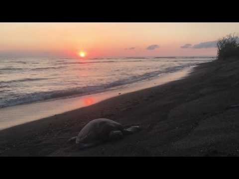 Turtle Beach: Kona, HI