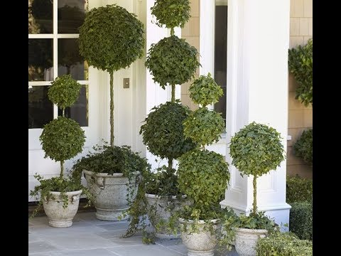 Forgot The Same Old Topiary - Do This On Your Front Porch Instead