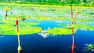 Ловля КАРАСЯ на ПОПЛАВОК в жару в густой траве Рыбалка на поплавок