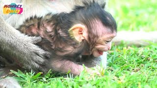 Newborn Alizza cry coz mom wrong hug for milk | Poor mom look tired need to rest | Monkey Daily 3390 thumbnail