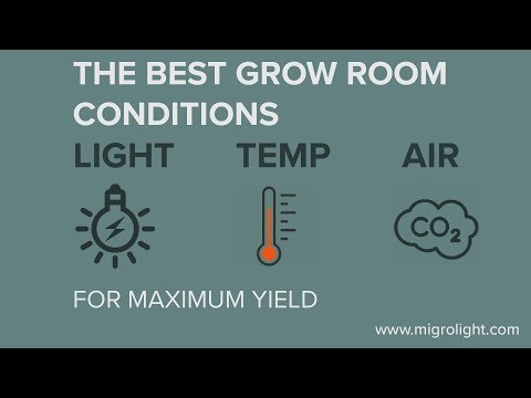 Best Grow Room Conditions For Maximum Yield - Light (PAR), Temperature and Air (CO2)