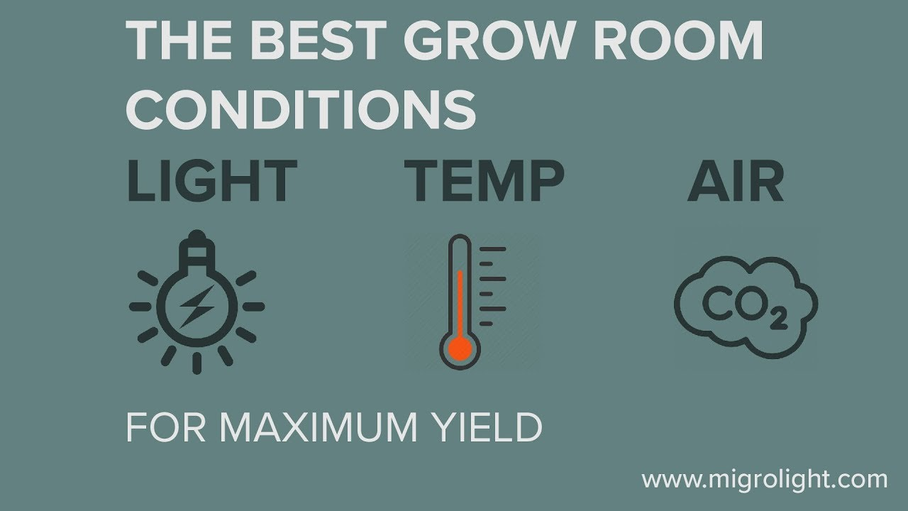 Best Grow Room Conditions For Maximum Yield Light Par Compare Automatic Controller Source Temperature And Air Co2