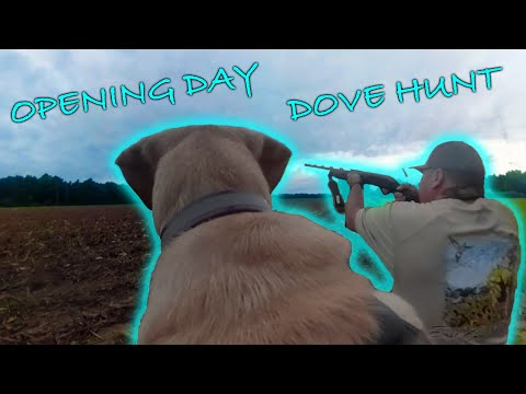 Dove Hunting ECW Style! 2019 NC Dove Opener!
