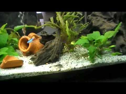 Guida l 39 allestimento dell 39 acquario doovi for Filtro tartarughiera esterno