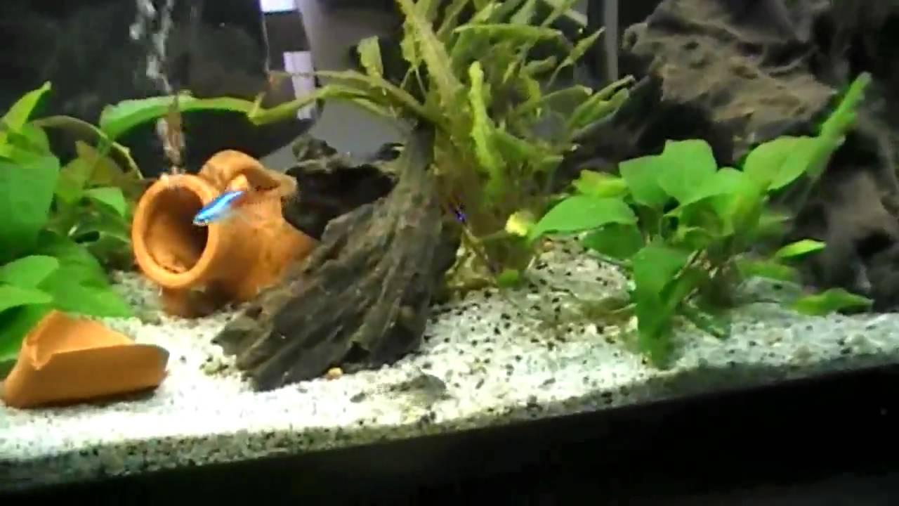 Il mio acquario 80l filtro esterno youtube for Acquario con filtro esterno
