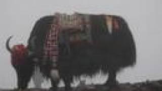Tibet Pictures 2007