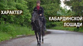 Асланбек Султанович Мирзоев. Характер и воспитание лошадей Кабардинской породы.