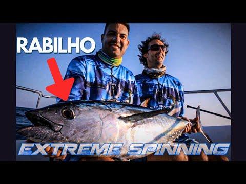 Bluefin tuna extreme spinning