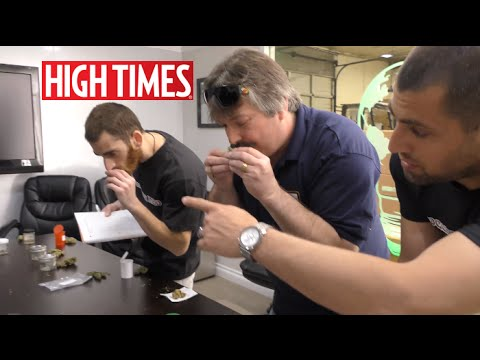 High Times  Cannabis Cup 2016 Sativa Sniff Test!