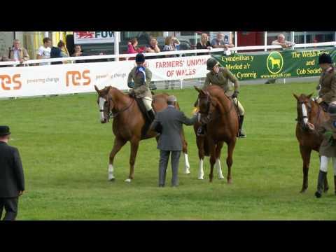 Ceffylau Hela Llai i'w Marchogaeth | Small Hunter Horses Ridden