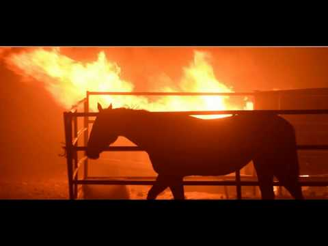 More Abuse From The Horse Racing Industry - Abandoned Horses In CA Fires