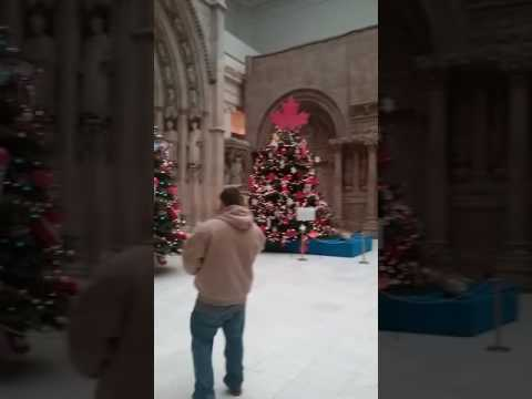 Carnegie museum of natural history Christmas