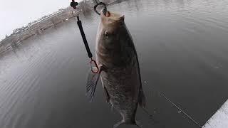 Рыбалка 29 декабря 2019 Куча поклевок и много сходов Бонус Новогоднее поздравление