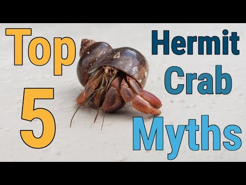 Top 5 Hermit Crab Myths (Learn The Truth!)