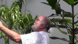 Baixar luciano hortencio - AS PALMEIRAS DO MEU QUINTAL