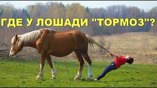 Как остановить лошадь?